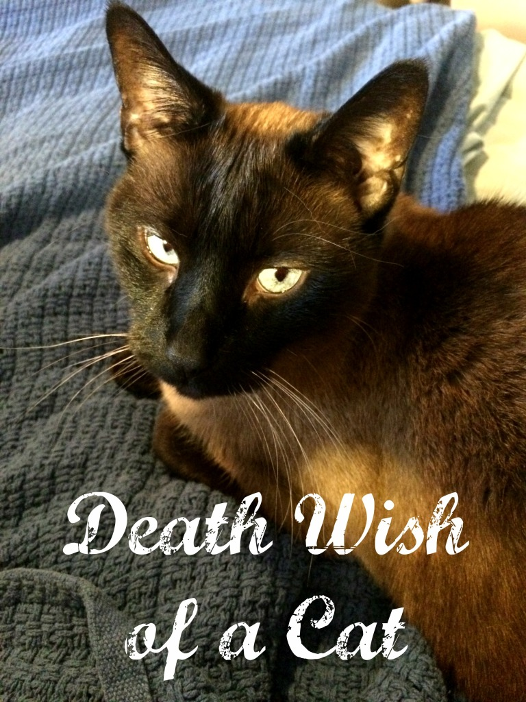 Death Wish of a Cat