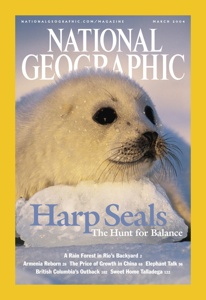 National Geographic Harp Seals