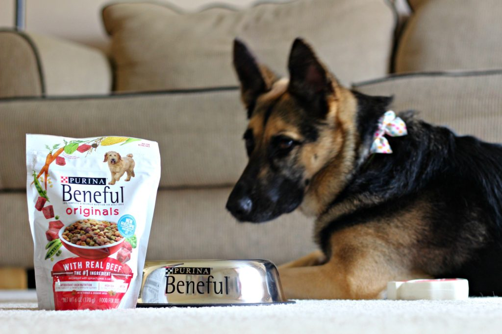 We have a wide variety of activities to work up Glory's appetite. We're sharing her favorites in this post! #FriendsofBeneful #PurinaPartner