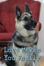 Dogs Are More: Love Makes You Family