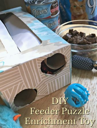 DIY Feeder Puzzle Enrichment Toy for Cats